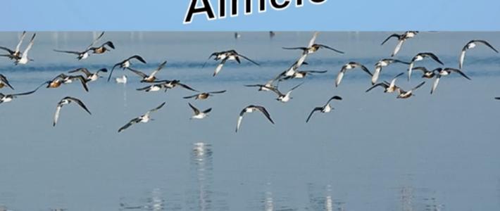 Karmelpresentatie Almelo in vogelvlucht